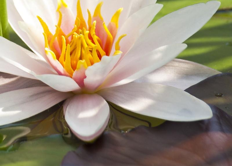 Плитка лилия фото