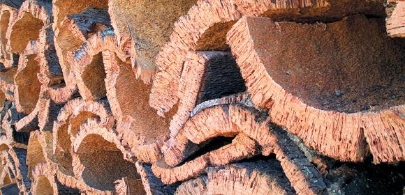 Кора пробкового дерева